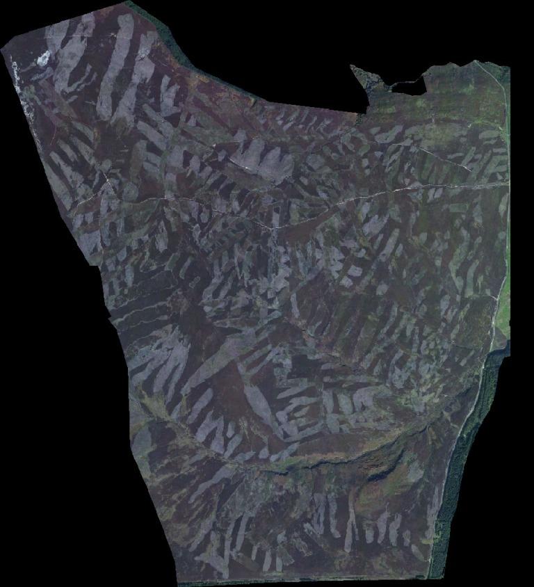grouse-moor